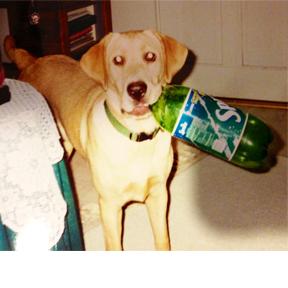 dog and sprite